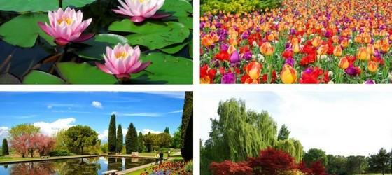 sigurta-fiori-collage